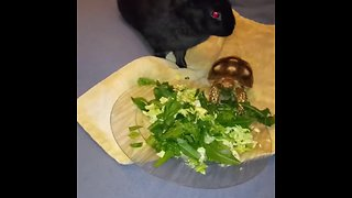 Rabbit and turtle enjoy healthy snack together