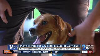 MD gives a puppy from Kosovo a second chance