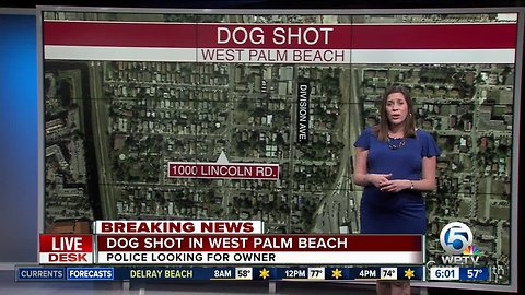 Pit bull shot overnight in West Palm Beach