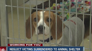 Hamilton County Humane Society overcrowded because of recent neglect case - Video