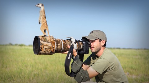 Cute Meerkats Use Photographer As A Lookout Post