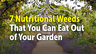 7 Nutritional Weeds That You Can Eat Out of Your Garden - Video