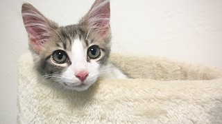 Owner documents kitten's first 3 months in 3 minutes - Video
