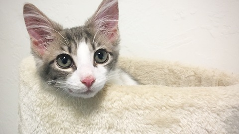 Owner documents kitten's first 3 months in 3 minutes