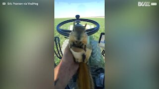 Squirrel goes for a tractor ride