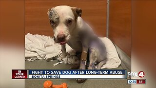 Dog fighting to survive after long-term abuse and neglect
