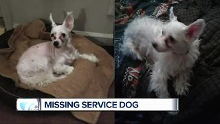 Lincoln Park woman looking for lost service dog - Video