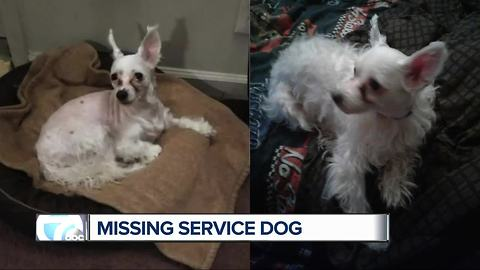 Lincoln Park woman looking for lost service dog