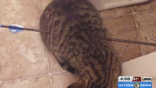 Cat dies after being shot with arrow - Video
