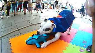 Super Dog Wows Crowd With Street Performance