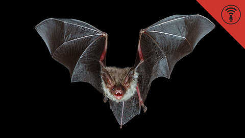 Stuff You Should Know: Internet Roundup: Bats Planning Their Next Move & Dollar Bill Secrets