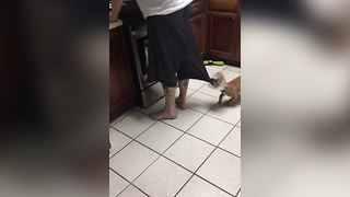 Funny Puppy Pulls Down His Owner's Pants