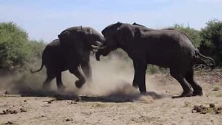 Epic fights in the animal world!