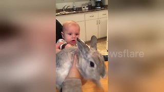 Baby's adorable reaction to meeting rabbit for the first time - Video