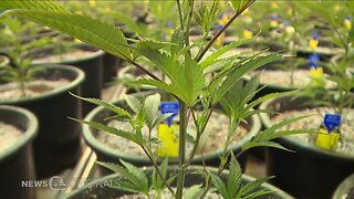 Three additional medical conditions moved to expert review for Ohio's medical marijuana