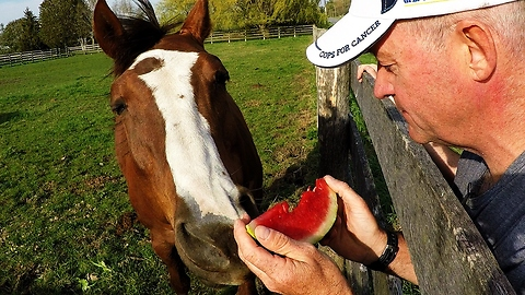 Horse Strongly Favors Head Of Lettuce Over Watermelon