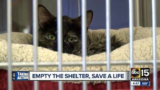MCACC hosts 'Empty the Shelters' event - Video