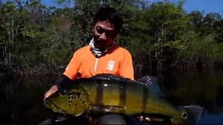 Jumbo Peacock Bass fishing in Colombia - Video