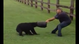 Heroes Rescue Bear With Bucket Stuck On Its Head - Video