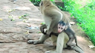 Why Young Monkey Doing Bad To Baby - Video