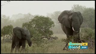 World Elephant Day - Video
