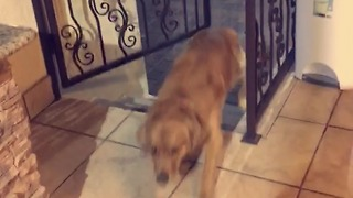 Clever dog learns to open gate with paws