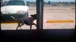 Stray dog checks himself into animal clinic - Video