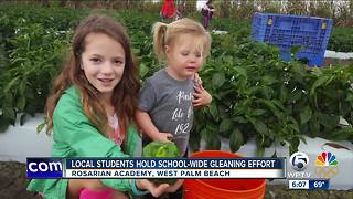 Local students hold school-wide gleaning effort - Video