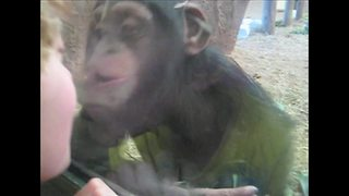 """""""Little Boy and Baby Chimp Send Each Other Kisses"""""""