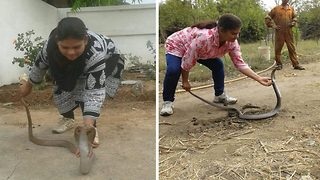 Snake guru: Daredevil woman is obsessed with using her bare hand to rescue cobras - Video