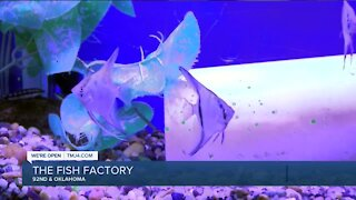 Local family business has makes aquarium dreams come true