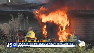 Dog sniffing for signs of arson in massive fire - Video
