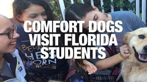 Comfort Dogs Travel to Florida to Help Students After School Shooting