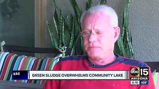 Green algae killing fish in Goodyear neighborhood