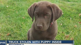 Stolen truck, puppy prompt police hunt - Video