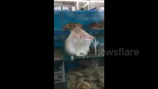 Stingray tries to break out of fish market - Video