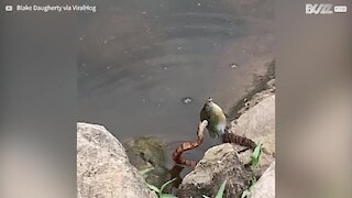 Snake tries to steal fish from child