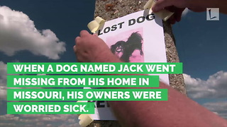 Dog Found Stuck in 15′ Drainpipe After Going Missing for 8 Days