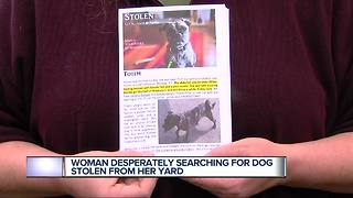 Dog stolen from yard in Southwest Detroit