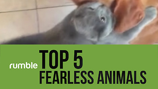 These top 5 fearless animals prove that size doesn't matter!