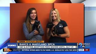 Good morning from BARCS & Maryland SPCA! - Video