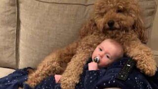 Lovable dog forms unique friendship with baby boy