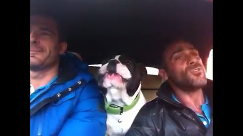 Owner Starts To Sing 'You Raise Me Up' But Dog Steals The Spotlight With His Voice