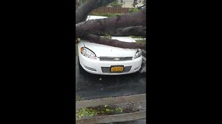 Tree falls and destroys car during Hurricane Irma in Doral, Florida - Video