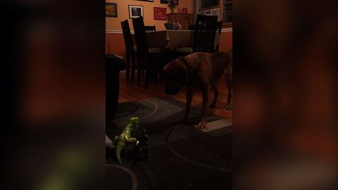 Dog Vs. Dinosaur Toy And The Toy Wins?