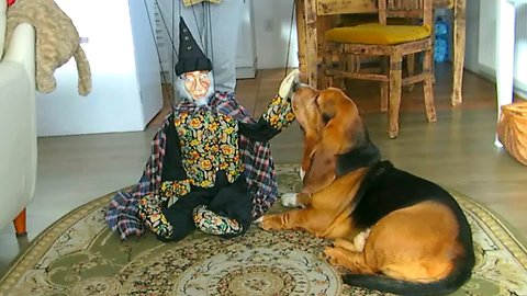 Wizard and dog