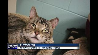 48 cats found in Plymouth hoarding house - Video