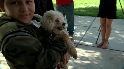 Therapy dog greets elementary students at school