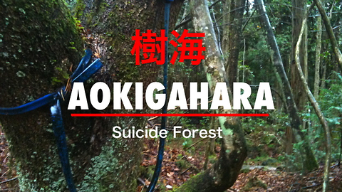 "A Look Inside Japan's ""Suicide Forest"", Aokigahara, Japan"
