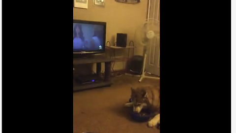 Dogs engage in truly epic argument